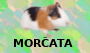 Morčata