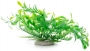 Ludwigia zelená 14–17 cm