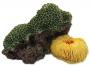 Dekorace AQUA EXCELLENT Mořský korál zelenožlutý 12,5 x 9,5 x 7,