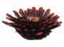 Dekorace AQUA EXCELLENT Mořský korál červenočerný 9,5 x 9,5 x 3,